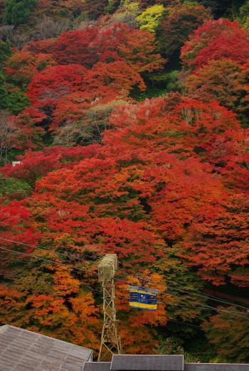 吉野山2011