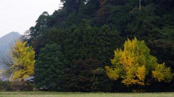 下部神社の銀杏