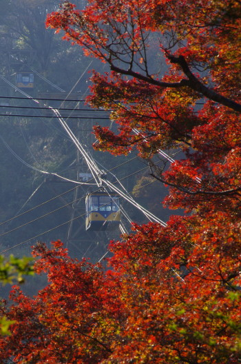 吉野山 紅葉とケーブル