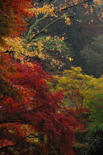 談山神社紅葉1