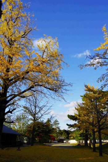 奈良公園 正倉院の銀杏