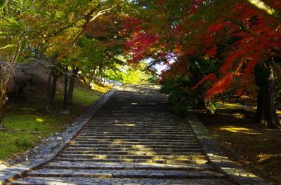 奈良公園 モミジ
