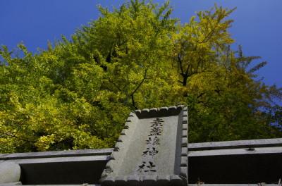 長谷寺 銀杏1