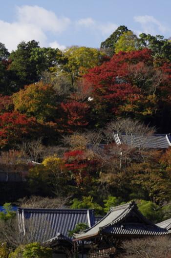 長谷寺 遠景