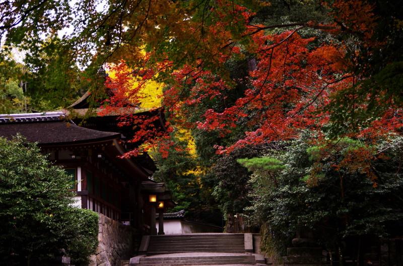 石上神宮 本殿紅葉