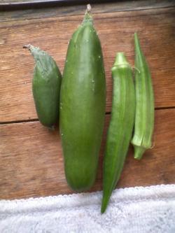 8-5収穫