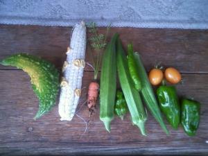 8-7収穫