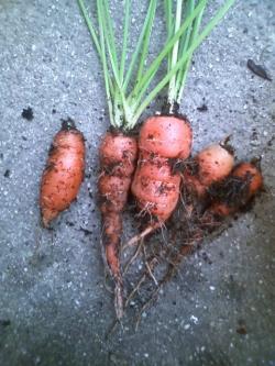 8-25収穫2