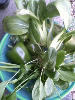 1-14収穫