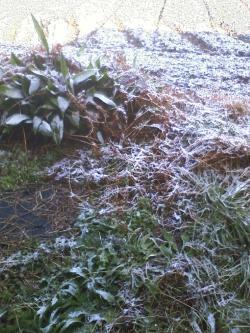 1-17雪