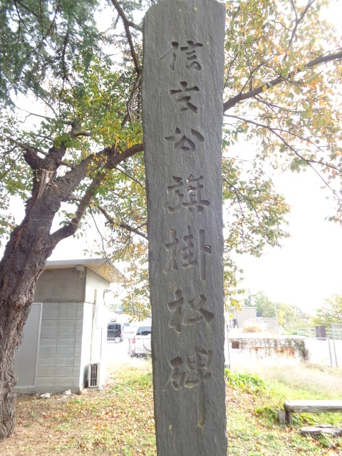 20141108旗掛松