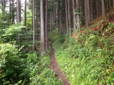 trail02.jpg