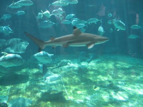 須磨海浜水族園20111010