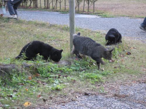 20111121深山公園の猫たち