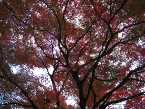 20111205龍野公園