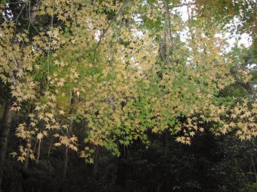 20111205紅葉谷