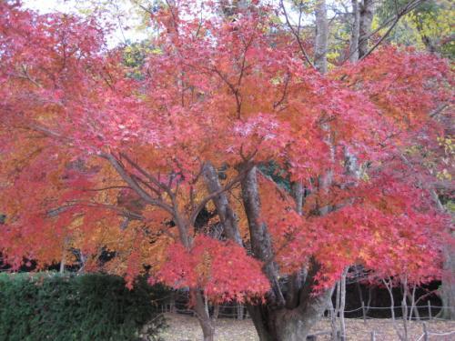 20111205聚遠亭