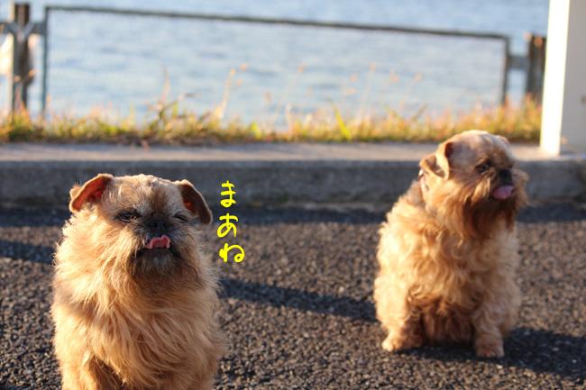 038-kamo-2.jpg