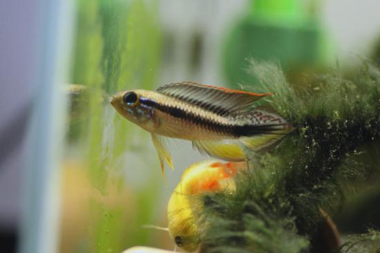 ゲフィラ.バルセロス♂1