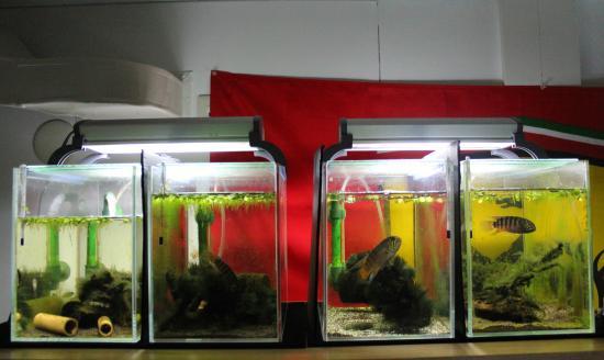 イバナカラアドケタ.トゥッカーノ格納庫水槽1