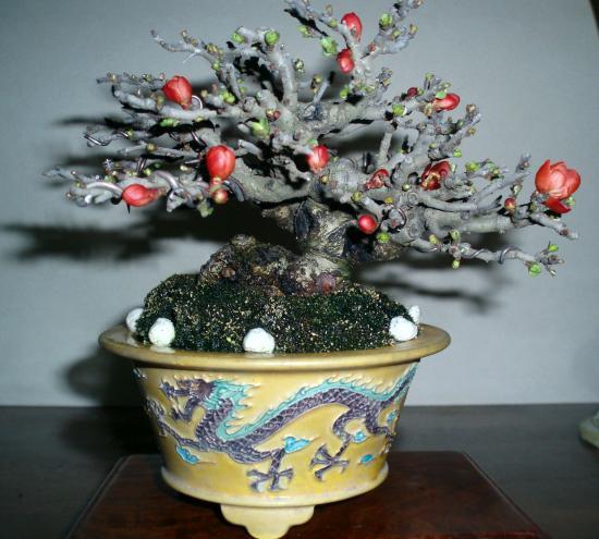 盆栽.長寿梅