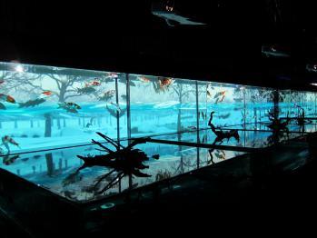 金魚0161