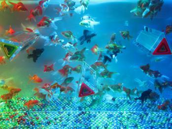 金魚0163