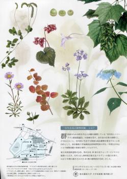 植物002