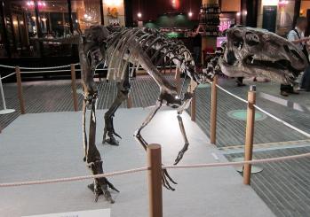 恐竜0011