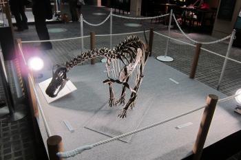 恐竜0006