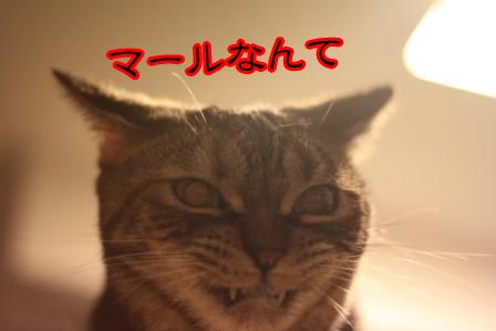いちご20131201-01