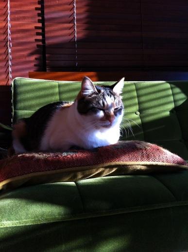 猫ビタ生成中