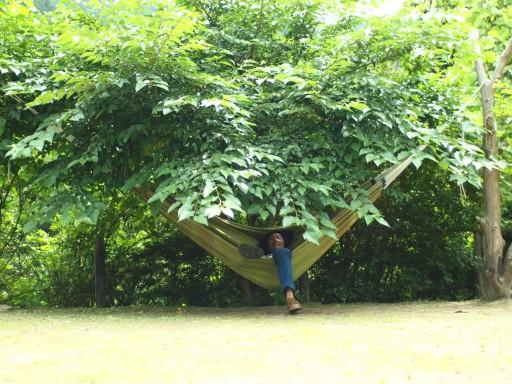 木陰でハンモックの夢叶う
