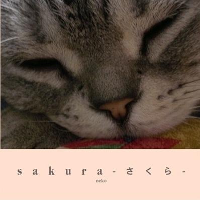 sakura-さくら-