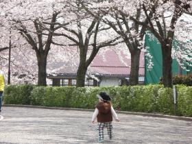 2010年4月18日 東御中央公園の桜