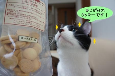 あこがれのクッキー