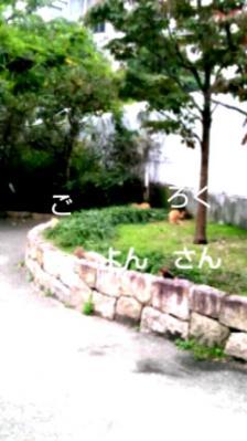 20111025_144112.jpg