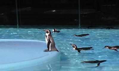 ペンギンかわいい☆☆