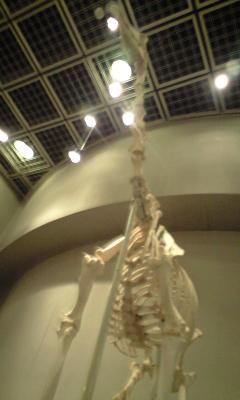 キリンは骨でお楽しみください。