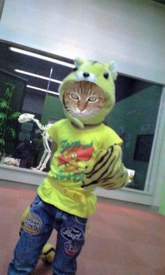 虎はイケメンでお楽しみください。