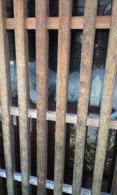 週2・3回しか開かないらしい猫カフェ(-_-)こんな隙間産業的癒し系(笑)