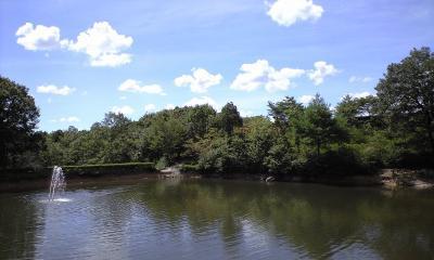 こっちは釣り堀的な池になってます。