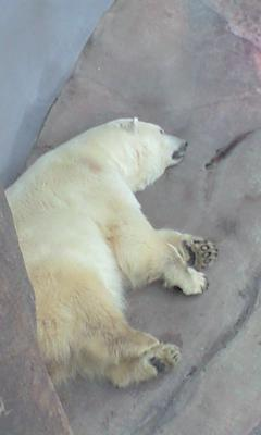 白クマ隅っこで(-_-)zzz