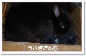[photo24215664]DSC_19880223subako