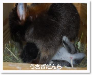[photo01002436]DSC_20110228