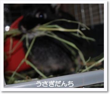 [photo04013511]DSC_21170404