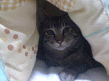 佐藤会長の家のネコ