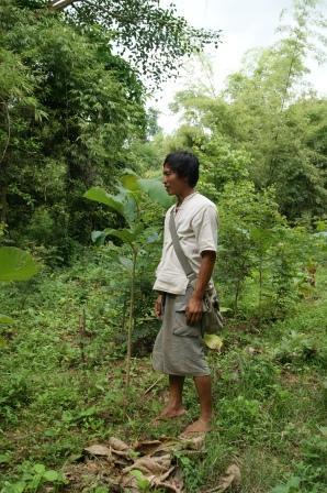 マインタク植林