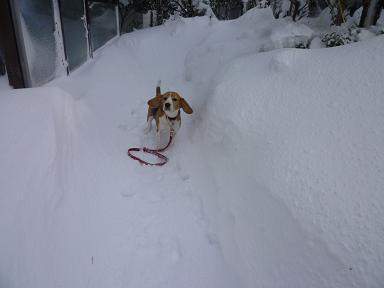 雪遊びはたのしいな