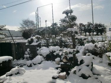 snow17Jan2011b.jpg